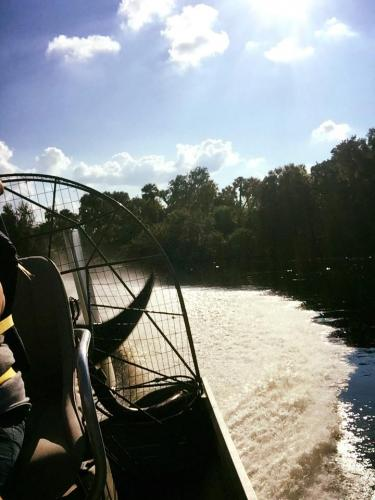 Airboat tour rides Florida alligators3