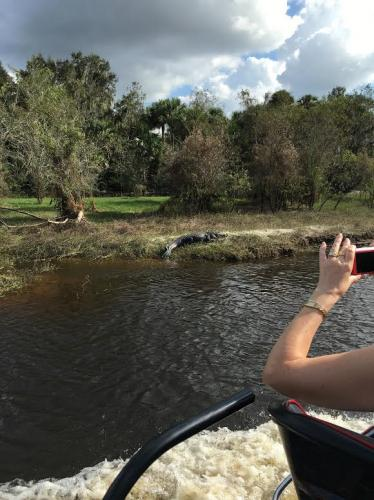 Alligator tours Airboat rides arcadia florida PeaceRiver WildLife Fresh Water FamilyFun